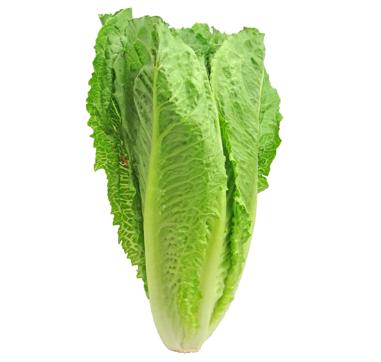 Why You Should Eat More Lettuce!